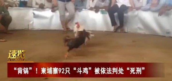 """2只鸡被判处死刑,惊动除湿'鸡'行业"""""""