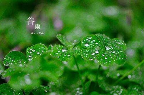 谷雨时节祛湿气