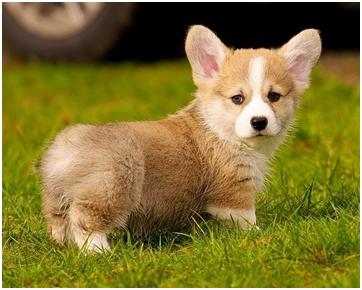 夏季引发狗狗皮肤病的病因,你知道多少?