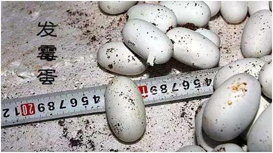 原来天气潮湿鸡蛋也会发霉
