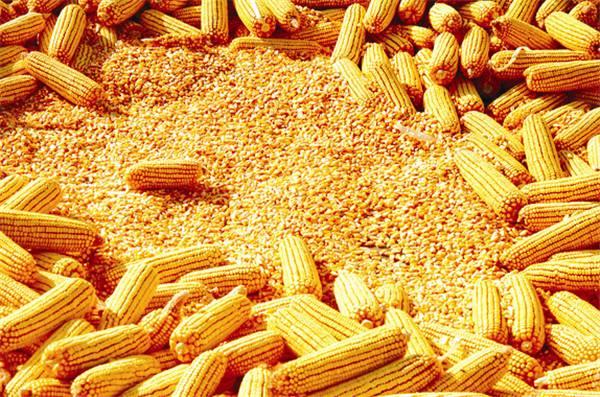 玉米的安全储存使用除湿机