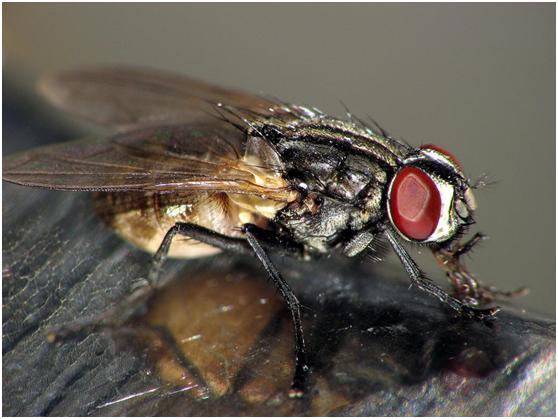 湿度对家蝇影响