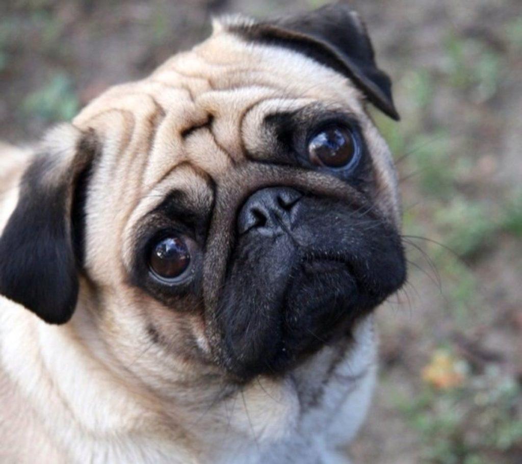 夏季,狗狗易患湿疹